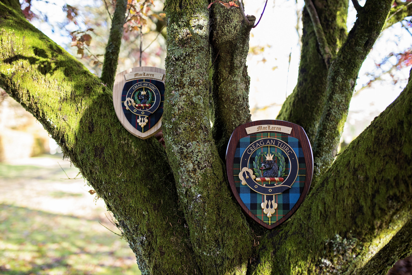 clan plaques in tree